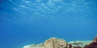 Yana Mira: Apnea | Macaronesia Fuerteventura