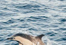 Biodiversity Canary Island | Macaronesia Fuerteventura
