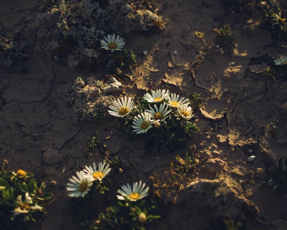 Biodiversity Fuerteventura | Macaronesia Fuerteventura