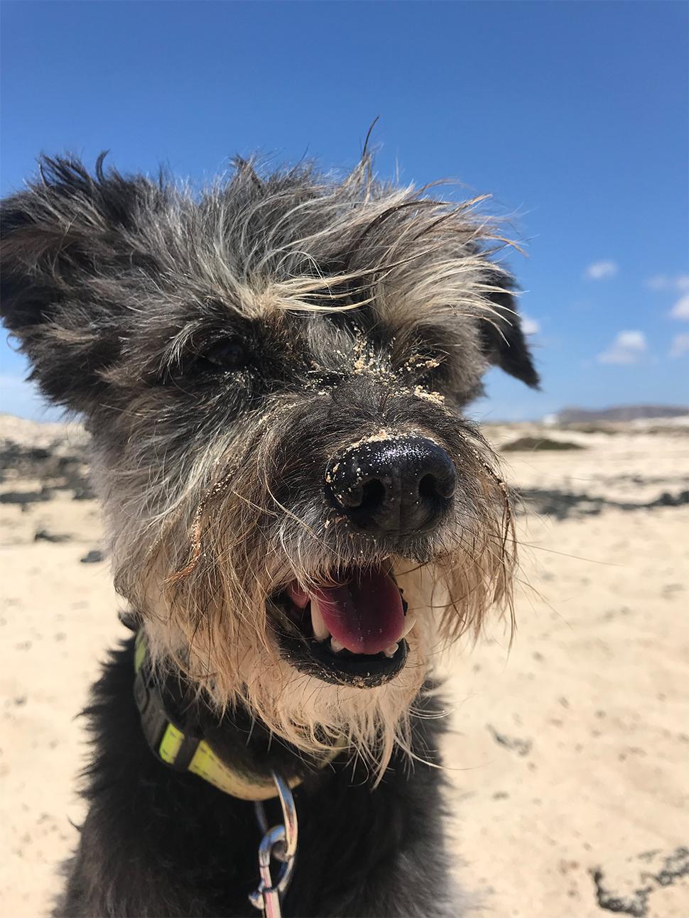 Mascotas: Hablando de Vacunas | Macaronesia Fuerteventura
