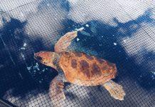 Islas del Plástico | Macaronesia Fuerteventura