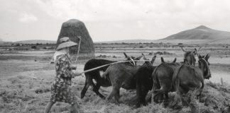 Exposición Casa de los Coroneles, Mujeres de Tierra y Sal   Macaronesia Fuerteventura