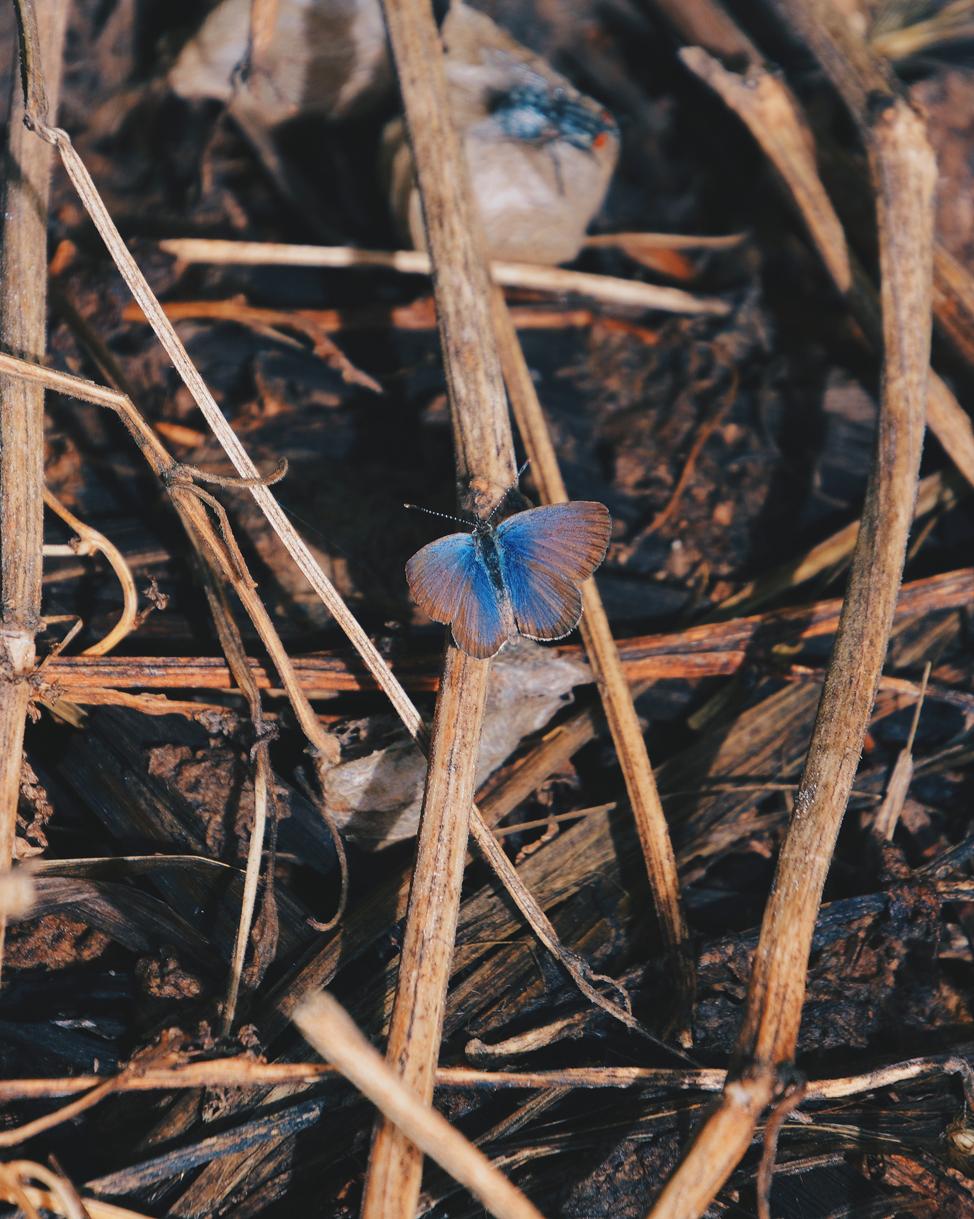 Primavera adelantada | Macaronesia Fuerteventura