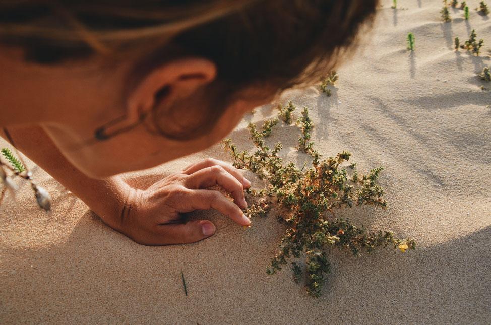 Árido, Biodiversidad Fuerteventura | Macaronesia Fuerteventura