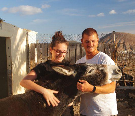 Refugio The Animal Academy Fuerteventura | Macaronesia Fuerteventura