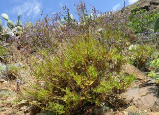 El Cabildo reparte plantas con motivo del Día Mundial del Medio Ambiente | Macaronesia Fuerteventura