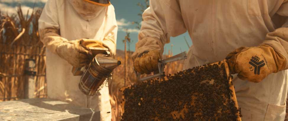 Miel de aloe vera de Fuerteventura | Macaronesia Fuerteventura