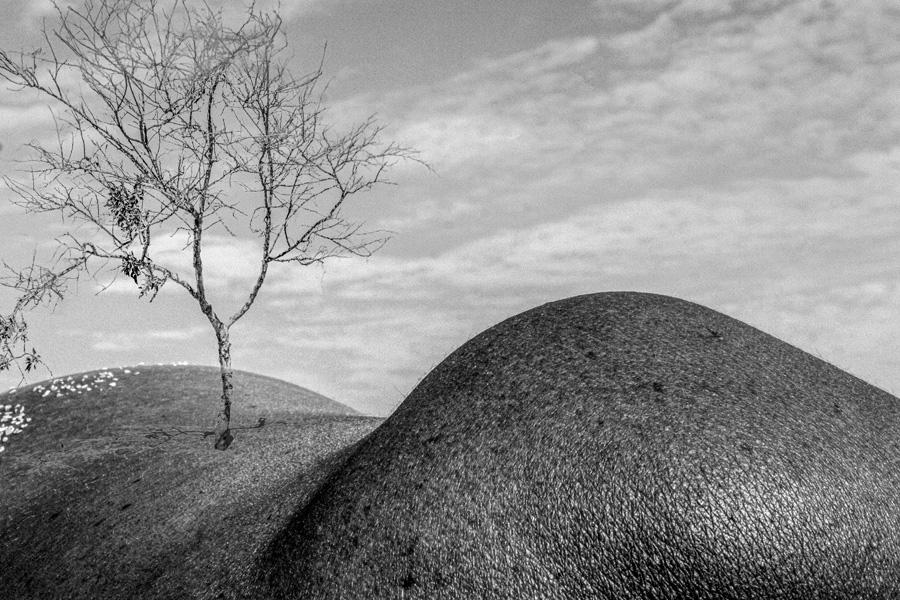 Series fotógraficas: Pieles, de Charo Barea   Macaronesia Fuerteventura