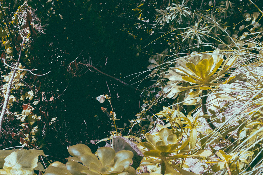 Series fotógraficas: In Communion, de Marta Presa   Macaronesia Fuerteventura
