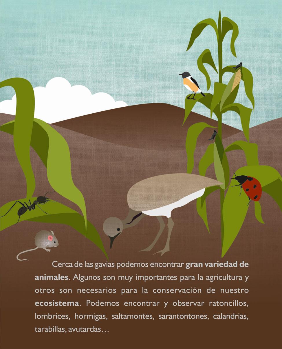 El ciclo de la Agricultura con ilustraciones de Erika Castilla   Macaronesia Fuerteventura