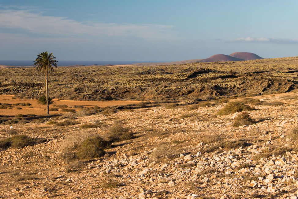 Naturaleza Salvaje   Macaronesia Fuerteventura